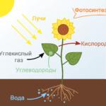 Какие есть основания утверждать, что всё живое существует благодаря солнечной энергии?