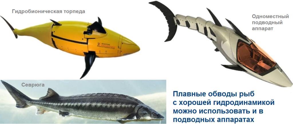 Почему для рыб характерны плавные переходы от одного отдела тела к другому?
