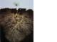 mikorizasimbioticheskijorgan